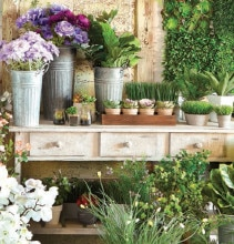 40% off Spring Floral & Greenhouse Market by Ashland®
