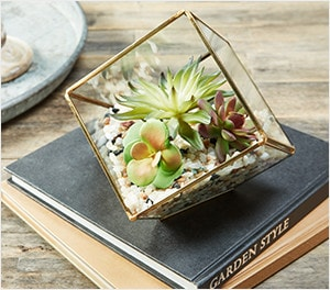 Terrarium Projects & Supplies