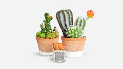 Featured Projects: Painted Pattern Cactus Pots