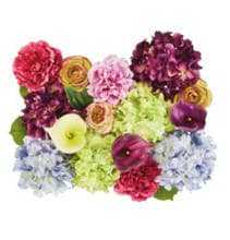 50% Off All Floral Stems & Bushes by Ashland®